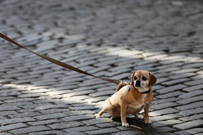 甘やかし過ぎは禁物です。犬を尊重するのとワガママを許すのは別物です。人間との暮らしに必要なしつけやルールを教えてあげましょう。