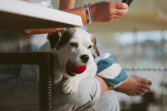 遊んでくれないと、テコでも動きません。「遊んで!」アピールされたときは、スキンシップが足りないかもしれないと思いましょう。日々のお散歩やちょっとしたスキマ時間に、愛犬の好きな遊びを一緒に楽しみながらやりましょう。