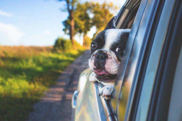 お出かけするのがもっと楽しくなります。車に乗るのが好きな犬なら、ドライブはこれまで以上に楽しい思い出がたくさんできることでしょう♪