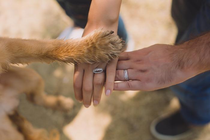 家族を一致団結させてくれることもあります。会話の少なかった家族の中でアイドル的な存在になり、毎日犬の話で盛り上がります。また、喧嘩した家族の間に入り、仲を取り持とうとするような行動をすることがあります。