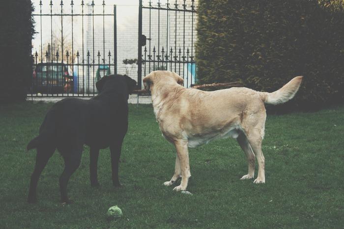 好奇心旺盛な性格の犬だと、ちょっとした隙間から逃げ出してしまうことも。犬が迷子になったり、事故に遭ったりしないように、戸締りしておくことも大切です。また、迷子になったときのために、迷子札やマイクロチップを装着するなど対策を練ることも必要です。