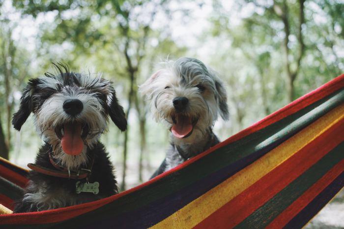 犬は喜びや楽しさなど多くのことを教えてくれます。だからこそ、同じように犬たちが喜んだり楽しんだりする表情がいつも見られるように、できることをしてあげてください。