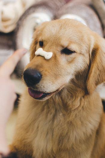 犬ってとても賢い動物です。愛情を持って接すれば、こんな芸もお手のもの!こうやって犬の成長をそばで見守っていけることも、犬を家族に迎える楽しみのひとつです。