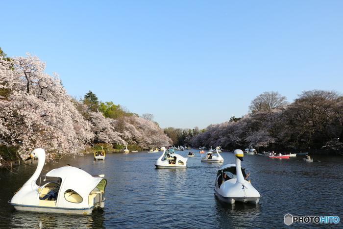 井の頭恩賜公園は、アートマーケッツ以外にも見どころが盛りだくさん!のんびりとボートに乗ったり、動物園でかわいい動物とふれあったり、公園内にあるカフェでお茶をしたり。さらに、少し歩いて「三鷹の森ジブリ美術館」に行くのも良いですね。アートマーケッツと一緒に、ぜひ周辺観光も楽しんでください。