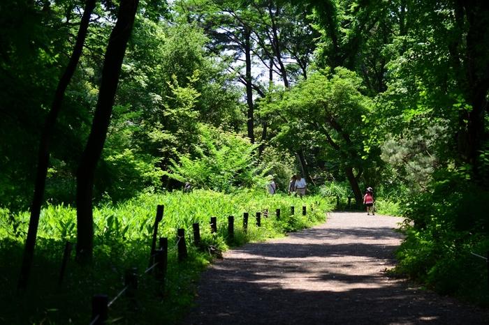 「国立科学博物館附属自然教育園」内『武蔵野植物園』。