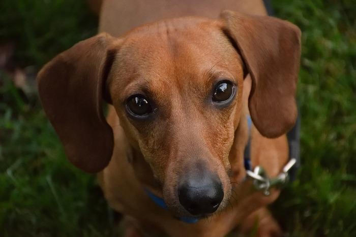 犬は飼い主の「もの」ではなく、かけがえのない「命あるもの」。犬を家族に迎える前に、一度考えてみてください。おもちゃ気分で欲しいのではないか、犬が年老いて息を引き取る瞬間まで一生涯面倒を見ることができるのか。考えるだけでなく、今ここで誓ってほしい。犬たちが不幸な一生を過ごすことのないように!そして、これからどんなことがあっても、すべては自分の責任であることを自覚してください。