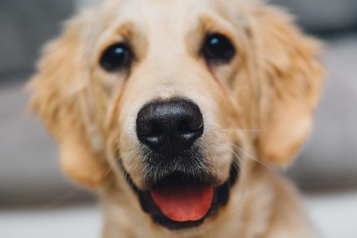 犬はいつでも自然体で接してくれます。たとえ、わたしたちの容姿がよくても悪くても、病気や障害が有っても無くても、肌の色が何色でも。愛情深く接すれば、犬は誰にでも心を開いてくれます。