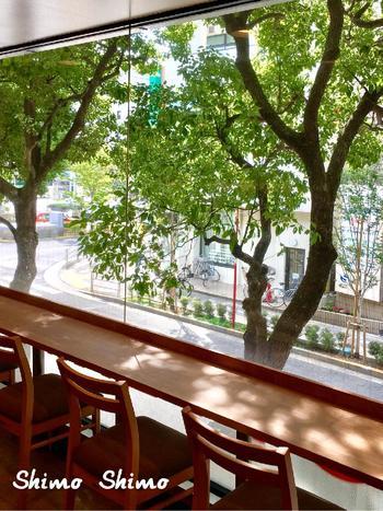 1年じゅう美しい木洩れ日が楽しめるのも常緑樹だからこそ♪