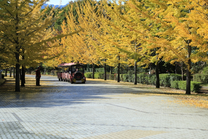 秩父市と小鹿野町にまたがるテーマパーク「秩父ミューズパーク」。春は桜、秋はイチョウ並木の紅葉など、季節ごとに違う草花を楽しむことができます。