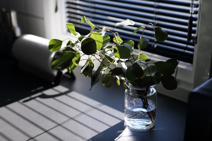 トイレや洗面所は、日が届きにくいお家が多いので日陰でも育てられるものがいいでしょう。水回りのため、多湿を好む植物にも向いている場所ですね。コンパクトで葉っぱが大きくなりすぎない多肉植物などもおすすめです。置きっぱなしにせず、たまに日光浴をさせてあげることが上手に育てるコツですよ。