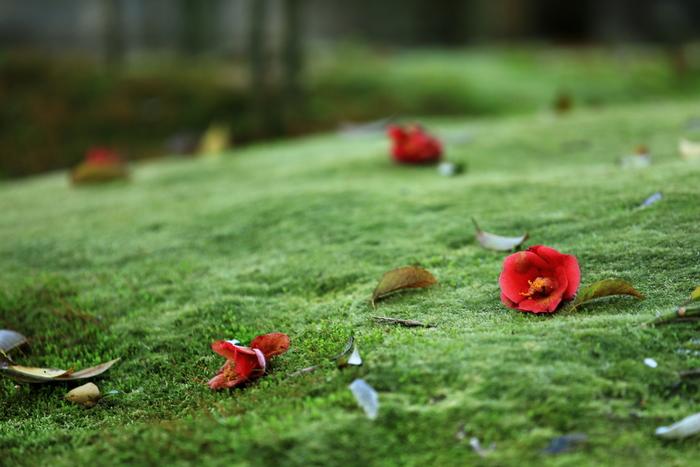 葉は、落花の後に散ります。いっぺんに散るわけではないので、気づかないことも。