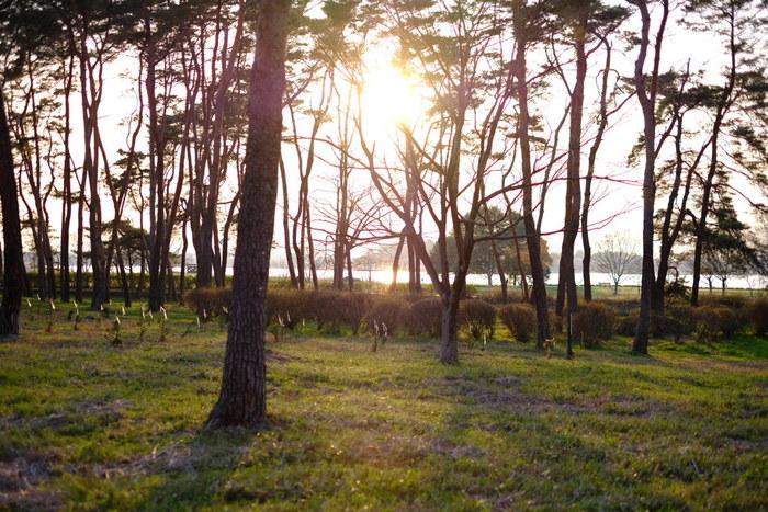 癒やしの効果があるといわれている森林浴ですが、その効果をさらに心身の健康に活かすことを目指す「森林セラピー®」という活動もすすめられています。 今回は、そんな「森林セラピー®」についてと、関東で森林浴ができる、おすすめの森カフェをあわせてご紹介します。