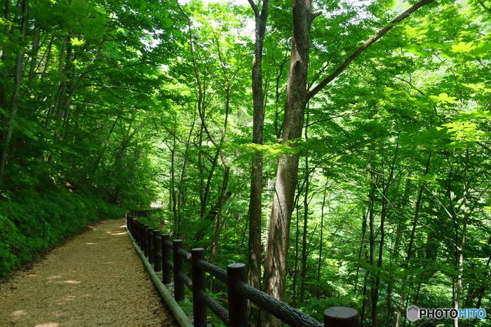 特定非営利活動法人の森林セラピーソサエティが運営する「森林セラピー®」という活動をご存知ですか?この言葉、初めて聞くという方も多いのではないかと思います。森林浴とはどう違うのでしょうか。 森には人の心を癒し、健康に導く力があることが実証されているのだそう。森林セラピー®は、そんな科学的な証拠によって裏付けされた森林浴を指します。また、森林浴は、森林を散策し、自然を感じることで安らぎや爽快感を得ること全体のこと。森林セラピー®は、資格を持った「森林セラピーガイド®」「森林セラピスト®」の指導のもと、安全と効果が実証されている「森林セラピー基地」の中で行われるプログラムを指します。