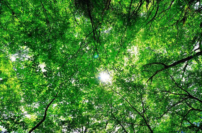 プログラムには、森林散策と森林安息が必ず含まれますが、具体的な内容はセラピストによってさまざま。 呼吸法やヨガ、マインドフルネスと呼ばれる瞑想体験、アロマテラピーなどのリラクセーション・プログラムの他、グループで自然を活かした遊び、工作や調理などを行う場合もあるそうです。専門家の方と一緒に行うので、より楽しく効果的に自然のエネルギーをチャージできそうですね。