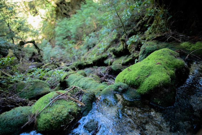 森林セラピー®の効果は、普段とは違う自然豊かな空間で、楽しく五感を癒し、自己成長につながるような気づきを得て、心身の健やかさを回復していくこと。興味がある方は是非受けてみてください。