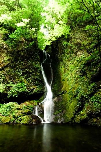 もちろん慣れ親しんだ友人や家族と、あるいは1人で森林浴を楽しむだけでも、森はあなたの心に癒やしの効果をもたらしてくれるでしょう。 緑いっぱいの景色とおいしい空気の中でホッとひと息つけたらいいな…そんな方には自然の中にあるカフェやお茶屋さんをおすすめします。東京にいるとは思えない大自然のそばで、癒しのひとときを。