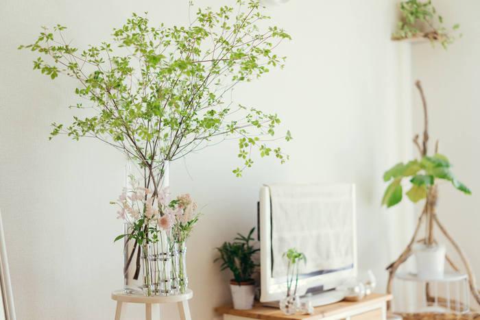 植物を飾るのも手軽にできるイメージチェンジですね。お部屋に自然を取り入れて、癒しの空間に。