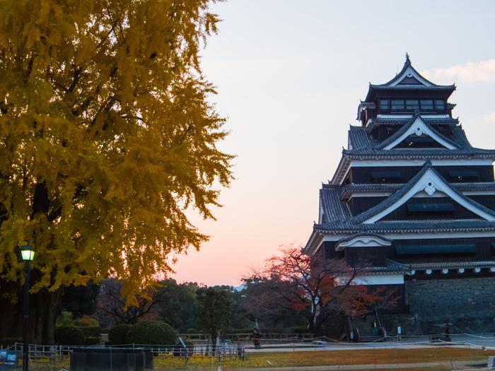 天守閣前に広がる広場にはイチョウの木が植えられていることから、熊本城には「銀杏城」の異名があります。イチョウは、城主・加藤清正のお手植えとも言い伝えられているようです。
