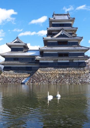 松本城は四季折々の楽しみ方があります。春には桜、夏には新緑、秋には紅葉、そして、冬には冠雪の北アルプスが楽しめます。また、お堀に白鳥が訪れることもあるそうです。偶然にも出会えたら、ラッキーですね。