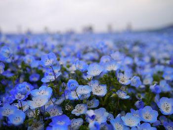 いかがでしたか?今年は気温の上昇で、例年より早く花々が咲き始めているので、開花情報は公式サイトなどをチェックしてくださいね。