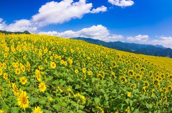 夏休みにお父さんとみたヒマワリ畑や、旅行中にバラ園に行ったことなど。父との思い出が蘇るようなお花をセレクトしてみてはいかがですか?