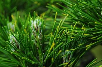いくつ知ってる?緑もえる季節にそっと葉を落とす、日本の常緑樹『常磐木』