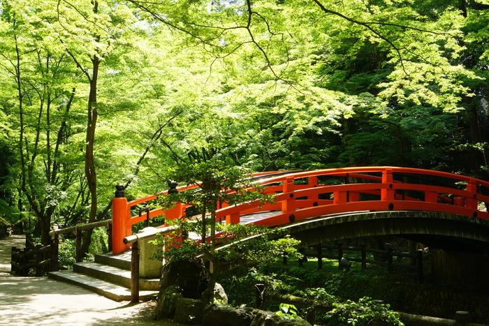 平安時代の中頃に創建され、菅原道真公を御祭神としておまつりする北野天満宮。全国各地におよそ1万2000社あるといわれる天満宮、天神社の総本社であり、京都の人々には親しみを込めて「北野の天神さん」、「北野さん」と呼ばれています。境内西側の紙屋川に沿って約350本のもみじが続く散策路で、青もみじ見物が楽しめます。