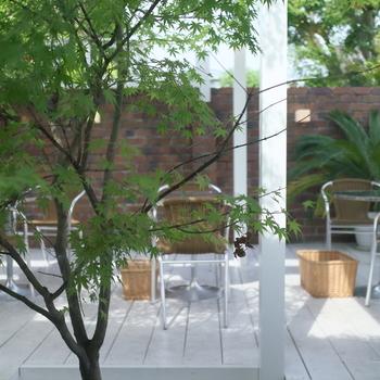 京都各地に点在する「青もみじ」の名所と、その周辺の散策で立ち寄りたいカフェやお店をご紹介しました。緑が鮮やかな心地よい季節の中、観光も食べ歩きも自分のペースで快適に楽しめる初夏の京都。この時期だけの素敵な思い出を求めて訪れてみてはいかがでしょうか。
