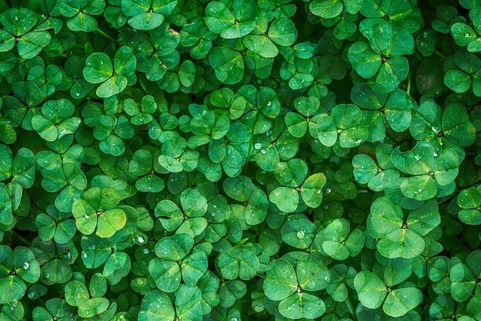 夏のネイルにおすすめなのが、フレッシュなグリーンです!こちらもビタミンカラーのひとつです、指先を爽やかに演出してくれるので、ぜひこの夏に挑戦してみて。