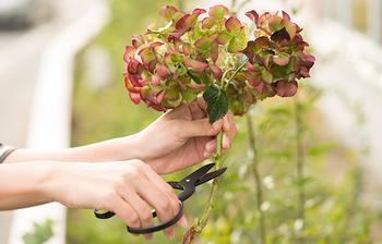 農家向けの収穫鋏を専門に製作する小林製鋏が手掛けた、女性の手でも扱いやすい花鋏(はなばさみ)。鋭い切れ味で茎の導管を潰さずカットできるので、切り花がしっかり水を吸い上げて長持ちします。