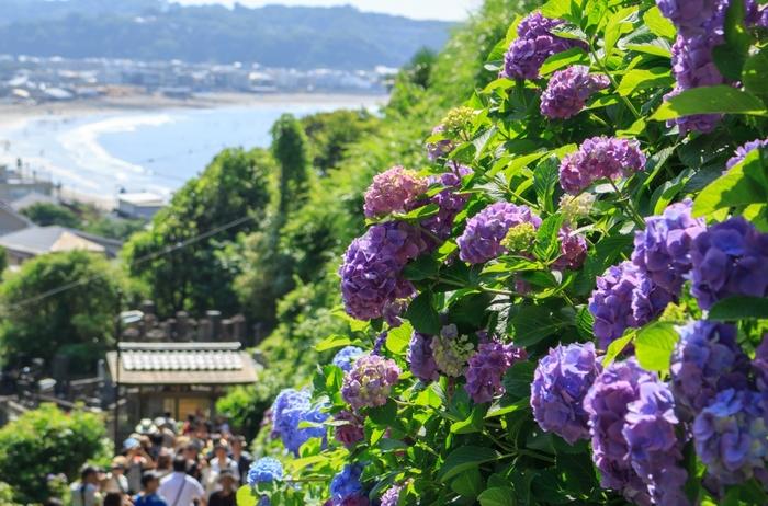 「鎌倉」のなかでも《長谷》は、高徳院の「鎌倉大仏」などがあり、常に観光客でにぎわう人気のエリア。近くに鎌倉山、由比ヶ浜の海もあり、自然豊かなことも大きな魅力。翌月の6月には、紫陽花のシーズンを迎えるので、長谷にある紫陽花の名所「長谷寺」へ行こうと計画される方もいらっしゃることと思います。  しかしそれだけではありません。実は、美味しいグルメやスイーツのお店も盛りだくさん。