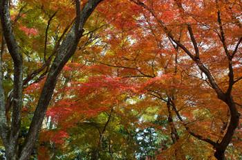 広葉樹を中心に、古代そのままの樹種が自生しています。樹齢を数百年を数える樹木も多く、鎮守の森という本来の役割を超えて、現在では、森林学等の学術分野からも貴重な森とされ、大切に保全されています。 秋なるとそれはそれは見事な紅葉を見ることができます。