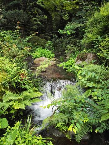 水の浄化作用について認識するのは、日本民族固有の精神、文化とは限りません。  ヒンズー教では、ガンジス川といった浄化力のある河川で死者の魂を送り、キリスト教では聖水を用いて洗礼の儀式を行います。またイスラム教では、礼拝前に清水で身体を清めることが戒律となっています。  【箱根湯本の老舗温泉宿「吉池旅館」の旧岩崎邸の別邸の回遊式庭園。箱根の自然と須雲川から引き込んだ清流を上手く取り入れた庭園は、広さ約一万坪にも及び、一年を通して風情ある景観が楽しめる。】