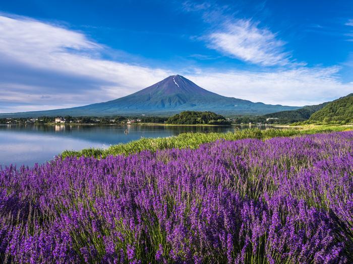末広がりの山容をした富士山、河口湖の静かな水面、抜けるような青空、大地を覆う紫色のラベンダーが織りなす景色は、まるで一枚の絵画のようです。