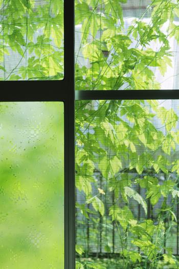 ベランダで植物を育てて、緑のカーテンにしてみましょう。成長が早く収穫もできるゴーヤやきゅうり、花も楽しめるアサガオやヘチマがおすすめです。爽やかな緑が窓一杯に広がり、目にも涼しく感じられますよ。