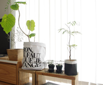 植木鉢は植物を育てていく上で重要な容器ですが、ちょっとデザインがいまいち・・・普通すぎてマンネリ気味・・といったときに便利なのが『鉢カバー』。デザインも素材も様々ですが、見た目が少しくしゃっとしたデザインが素敵なこんな鉢カバーなら、お手持ちの鉢にかぶせるだけで簡単に鉢イメチェンできます!