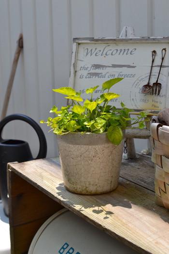 スペースに余裕があればグリーン専用の空間を作ってみても◎。お庭が無くても、ベランダなどにミニガーデニング風にウェルカムボードと一緒に飾って楽しんでみましょう!