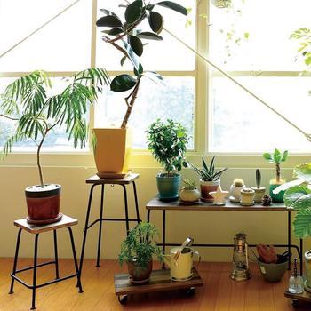 新緑が美しい季節になってきましたがお部屋にもグリーンを取り入れてみてはいかが?