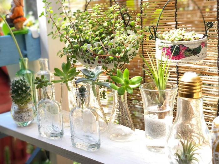 観葉植物を置きたいけれど、家の中に土は入れたくないという人におすすめなのが水耕栽培!人口土を使ったハイドロカルチャーなども人気です。