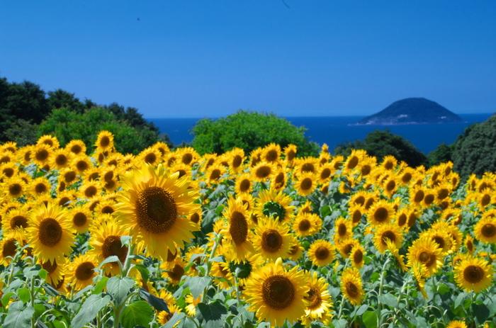 いつ訪れても季節の花で包まれ、目の保養にぴったり。これからの季節はひまわりの他、ダリア、 ブーゲンビリア、サルビアなども見られます。