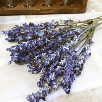 青紫色がキレイなブルーサルビア。ドライフラワーにするとラベンダーのようになります。花が落ちやすいので大きく開花する前にドライフラワーにするのがおすすめです。