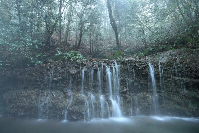 小涌園から林道を抜けて約10分。人気もまばらなハイキングコースの途中にあるのは、さらさらと水が流れる横長の滝。千条の滝(ちすじのたき)は、高さ約3m幅20mの岩盤を、水が幾筋にも分かれてすだれ状に流れていきます。