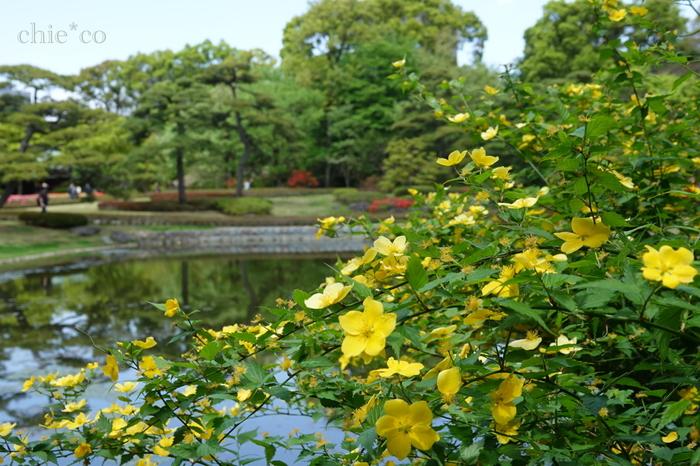 皇居東御苑の広さは約21ヘクタール。四季折々の花が咲きほこり、植物に詳しくない方でも楽しめます。水辺に立つと風が涼しく、思わず深呼吸したくなるほど。
