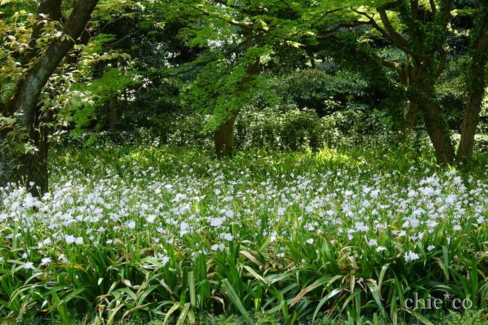 二の丸庭園の雑木林。夏はセミの声が響き、木々の間を風が通り抜けます。野鳥や虫たちも多く目にすることができて、童心にかえったような時間を過ごせるスポットです。