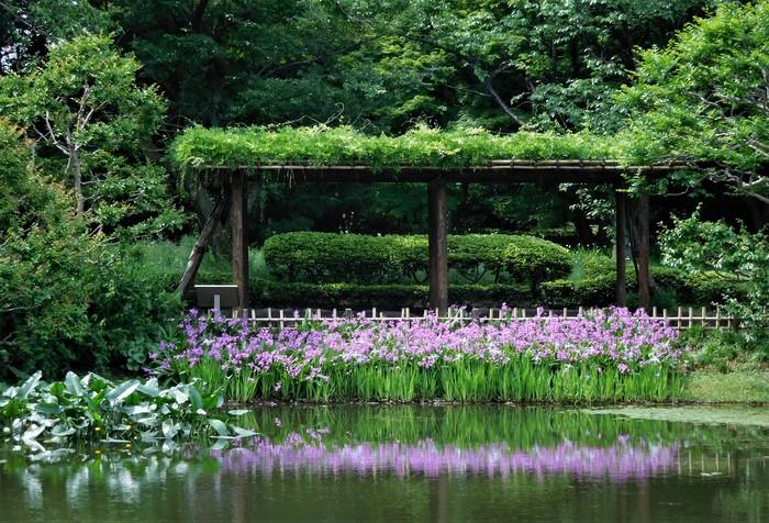 花菖蒲は明治神宮神苑から株を譲り受けたもので、5~7月に見事な花を咲かせます。水面に映る花の姿は、なんとも風情がありますね。