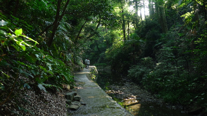 約1キロの遊歩道は、都心とは思えないほど自然が豊か。木陰が多く、すっと気温が下がるのを感じます。