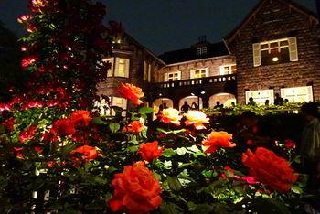 バラのシーズンはライトアップも行われています。昼間とはまた違う、幻想的でロマンチックな雰囲気にうっとり。