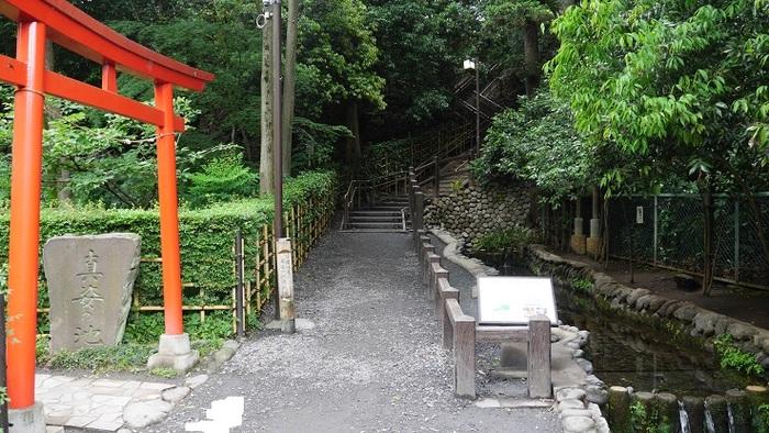 真姿の池(ますがたのいけ)をはじめとする崖線下の湧水群は、環境省選定名水百選のひとつや東京都の名湧水57選にも指定されているほど、水の美しさが評価されています。古くは848年(嘉祥1年)、絶世の美女といわれた嘉祥1年が病気に苦しみ、病の平癒を願い全国行脚をした際に、武蔵国分寺で願をかけたところ、「池で身を清めよ」との霊示を受けて快癒したとの言い伝えがあるそう。