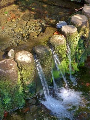 蛍が生育するとも言われるほど水は清らか。さらさらと流れる水音を聞きながらの散策は、大人さんぽにおすすめです。