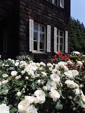 """""""バラの庭園""""とも呼ばれる旧古河庭園。春と秋に咲くバラが約100種類植えられています。色とりどりの花と洋館は、まるでヨーロッパにいるような気分に。真夏にはバラのシーズンは終わってしまうので、その前に訪れてみては?"""